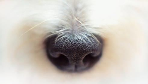 犬の鼻の画像
